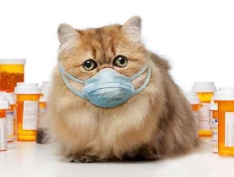 Что делать, если кот чихает и кашляет?