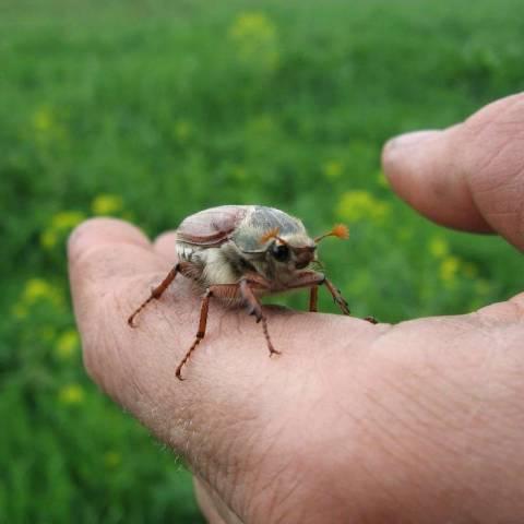 Что символизируют сны о жуках на теле?