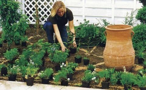 Что высадить в огороде в июле?