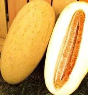 Как правильно выбрать вкусную спелую дыню Торпеда?