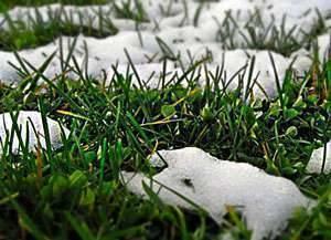Особенности ухода за газонной травой после зимы
