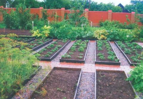 Планирование огорода на даче