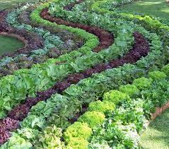 План огорода: где что садить?