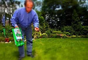 Когда весной сеять газонную траву?