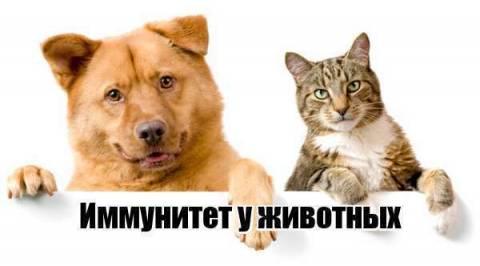 Иммунитет у животных