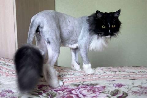 Как бороться с круглогодичной линькой кота?