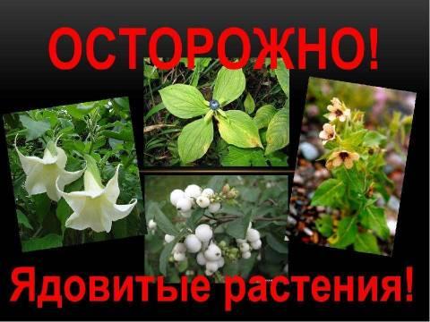 Как действовать при отравлении ядовитыми растениями?