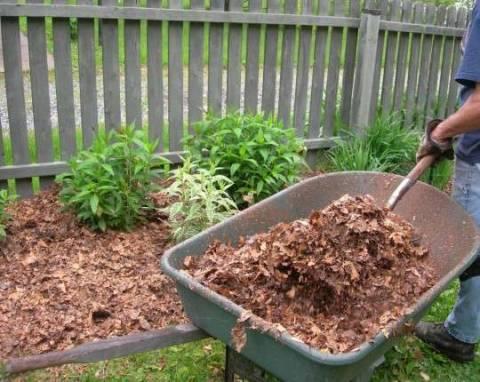 Как используют опавшую листву для удобрения?