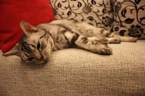 Как избавиться от запаха мочи кота: эффективные и безопасные составы