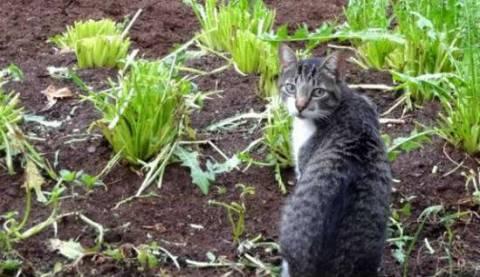 Как отвадить котов от огорода