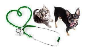 Как поставить капельницу коту или собаке?