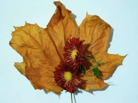 Как правильно делать гербарий?