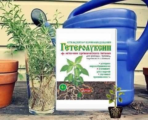 Как применяют гетероауксин?
