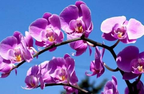 Как правильно поливать орхидею фаленопсис в домашних условиях фото и видео