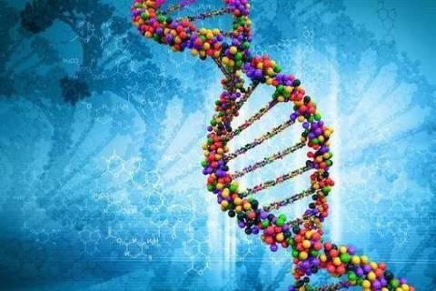 Какие бывают формы партеногенеза?