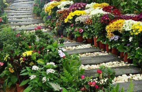 Какие цветы посадить вдоль дорожки?