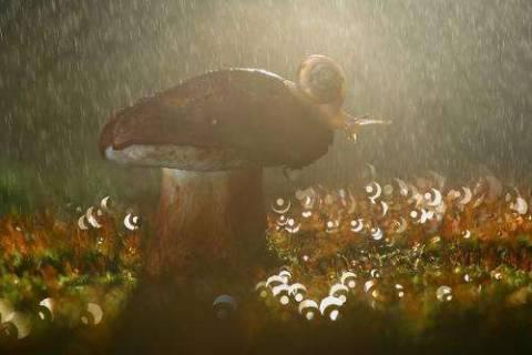 Какие дожди называют грибными?