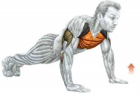 Какие мышцы работают при отжиманиях от пола?