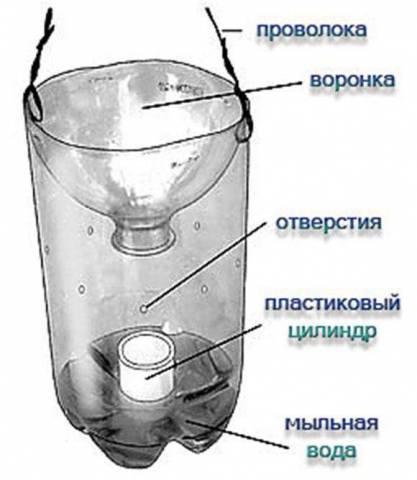 Ловушка для мошек из пластиковой бутылки своими руками