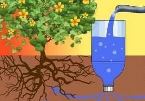 Методы капельного полива на участке: бочка, капельницы и бутылки
