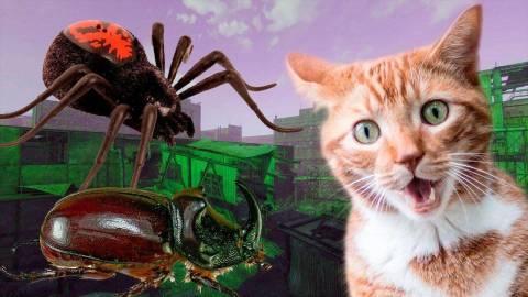 О чем вещают сны с жуками и пауками?