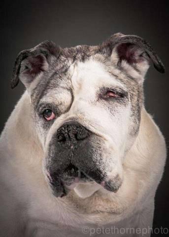 Инсульт у собаки: симптомы, лечение