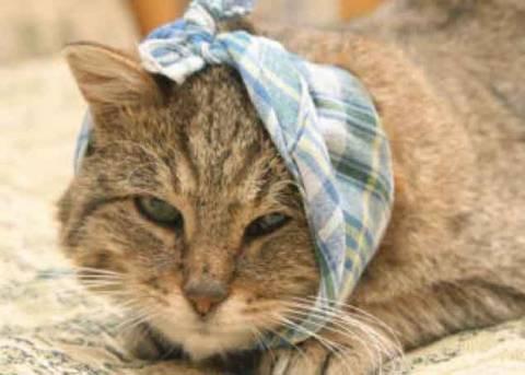 Отит у кошек: симптомы и лечение в домашних условиях
