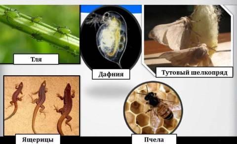 Партеногенез, андрогенез, гиногенез и их характеристика