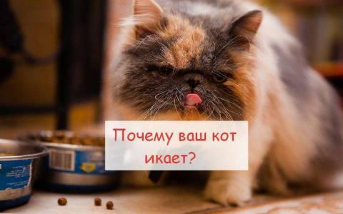 Почему икает кот?