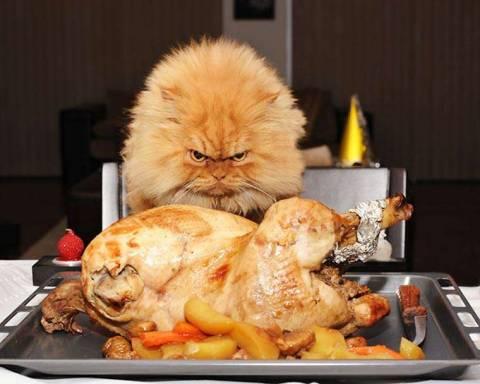 Почему кот не ест мясо?