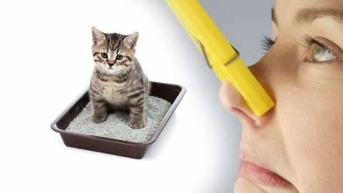 Почему сильно воняет моча кота?