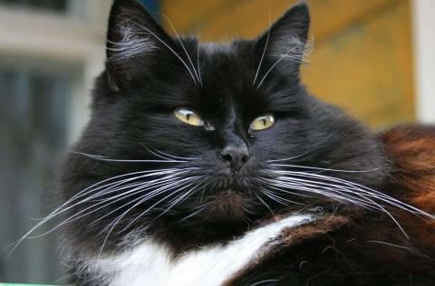Почему у кота выпадают усы?