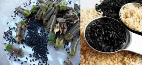 Правильное употребление кунжута: жареный, очищенный, темный и прочие