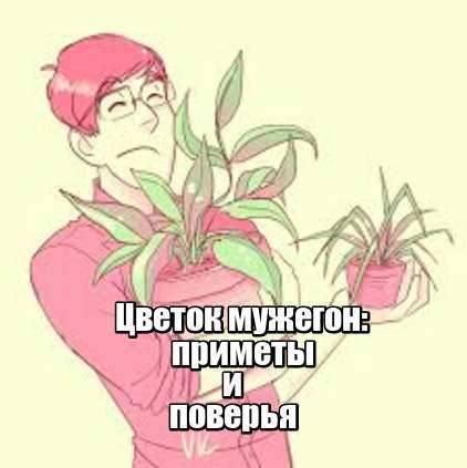 Приметы и поверья цветка мужегона