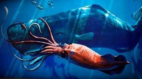 Самые большие кальмары в мире – их размеры и фото