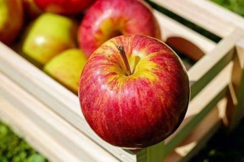 Выбираем сорт яблок для посадки: все, что важно знать