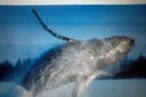 Почему кит голубой?