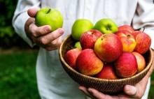 Самые лучшие сорта яблок для выращивания в средней полосе
