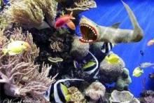 Как ухаживать за аквариумом?
