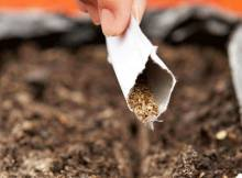 Посадка моркови весной: нюансы правильной высадки и выращивания культуры