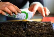 Посадка рассады весной: главные правила и требования