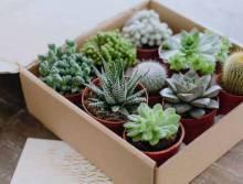 Как вырастить суккуленты из листа, семян и черенка?