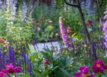 Жароустойчивые цветы: что можно посадить на клумбе?
