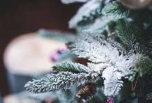 Как можно украсить уличную елку для детей?