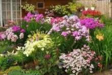 Какие цветы посадить на даче: роскошные варианты для загородной клумбы