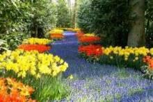 Какие цветы лучше использовать для односезонного озеленения?