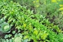 Что сажать в огороде: советы от специалистов