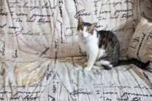 Как вывести запах кошачьей мочи с дивана и ковра: стопроцентно эффективные способы