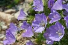 Какие цветы сажать в январе: советы и рекомендации