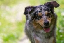 Как научить собаку команде «Голос»? Есть несколько эффективных методик